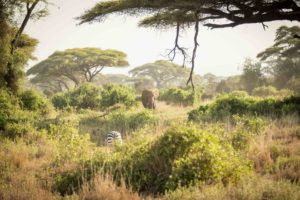 Safari by Private Jet with Abercrombie & Kent